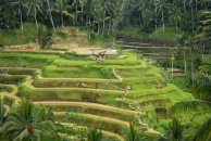 Ubud tour and Beyond