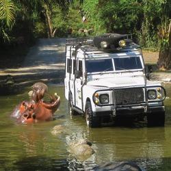 2EC_safari44 $75